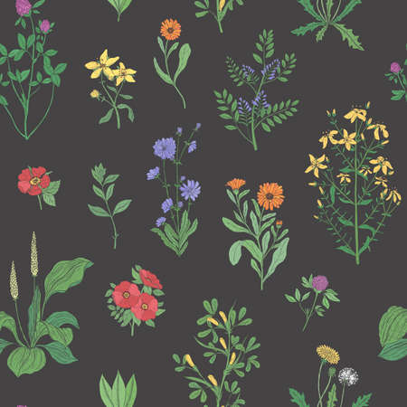 Beautiful floral seamless pattern with meadow herbs on black background. Illustration