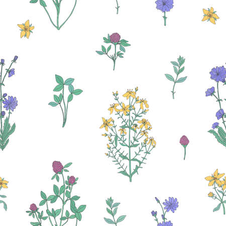 Elegant botanical seamless pattern with flowering herbs on white background. Ilustração