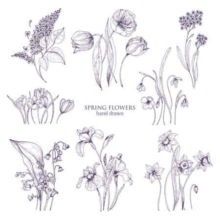 Set of gorgeous botanical drawings of spring flowers - tulip, lilac, narcissus, forget-me-not, crocus, lily of the valley, iris, snowdrop. Blooming plants hand drawn with lines. Vector illustration Vettoriali