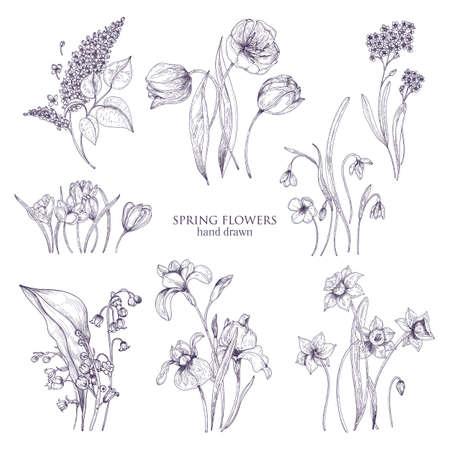 Zestaw wspaniałych rysunków botanicznych wiosennych kwiatów - tulipan, liliowy, narcyz, niezapominajka, krokus, konwalia, irys, przebiśnieg. Kwitnące rośliny ręcznie rysowane liniami. Ilustracji wektorowych