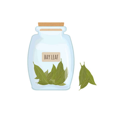 Dried bay leaves stored in clear jar isolated on white background. Piquant condiment with pungent smell, food spice, cooking ingredient in transparent kitchen container. Colored vector illustration.