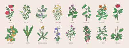 Collection of wild meadow herbs, blooming flowers and tropical plants with edible berries on white background.
