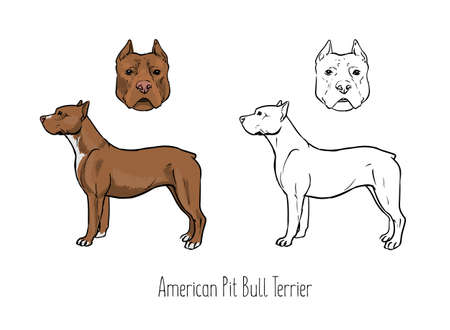 black and white pit bull: Collection of colored and monochrome contour drawings.