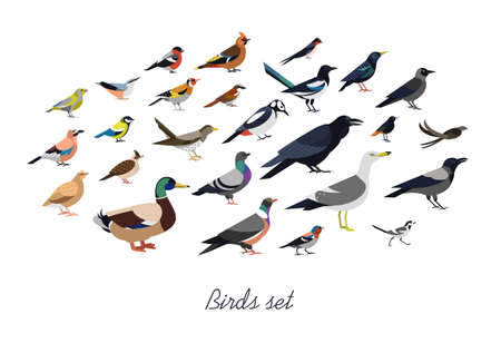 Collection of city synanthrope and wild forest birds drawn in flat geometric style, side view. Illustration