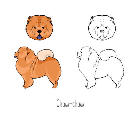 Chow Chow icon. Illustration