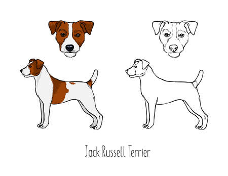 Collection of cute drawings of head and full body of hunting dog.