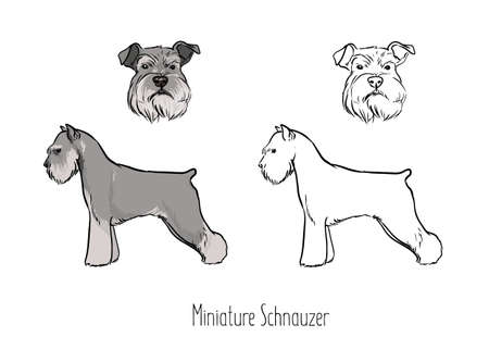 Set of cute drawings of head and full body of silver Zwergschnauzer. Illustration