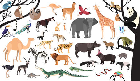Collection of exotic animals and birds living in savannah and tropical forest or jungle isolated on white background. Set of cute cartoon characters. Flat bright colored vector illustration. Illustration