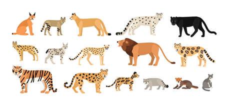 Colección de diferentes gatos salvajes y domésticos. Animales exóticos de la familia Felidae aislados sobre fondo blanco. Paquete de personajes de dibujos animados lindo. Ilustración de vector zoológico colorido plano.