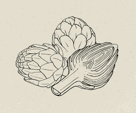 Full and cut budding artichoke flower heads hand drawn with black contour lines.