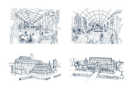 Bundel uit de vrije hand tekeningen van kassen vol jungleplanten. Stock Illustratie
