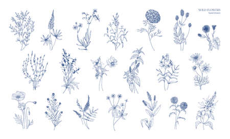 Collection of realistic detailed botanical drawings of wild meadow herbs, herbaceous flowering plants, gorgeous blooming flowers isolated on white background. Hand drawn vintage vector illustration.