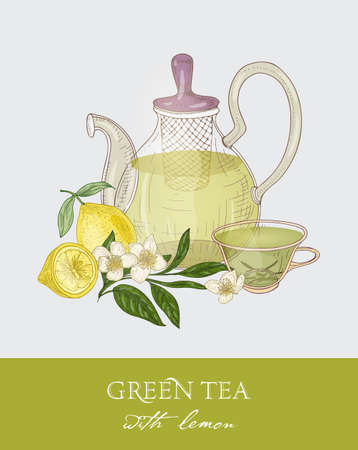Colorful drawing of teapot with strainer, transparent cup full of green tea, fresh leaves and flowers on gray background. Tasty aromatic drink. Vector illustration hand drawn in vintage style for tag Illustration