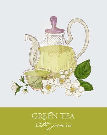 Colorful drawing of glass teapot with strainer, cup of green tea, jasmine leaves and flowers on gray background. Organic traditional beverage. Vector illustration hand drawn in antique style. Illustration