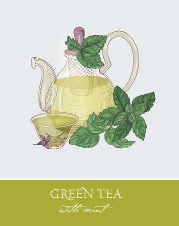 Colorful drawing of glass teapot with strainer, cup of green tea, organic mint leaves and flowers on gray background. Tasty natural beverage. Elegant vector illustration hand drawn in vintage style.