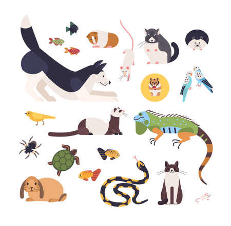 Collection of pets isolated on white background. Set of cute cartoon domestic animals - mammals, birds, fish, rodents, reptiles and insects. Modern colorful vector illustration in flat style. Illustration