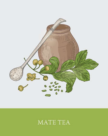 Mate drink inside calabash gourd, bombilla with filter or straw, ground tea and plant with leaves and berries. Traditional South American herbal infused beverage. Colored vector illustration for tag
