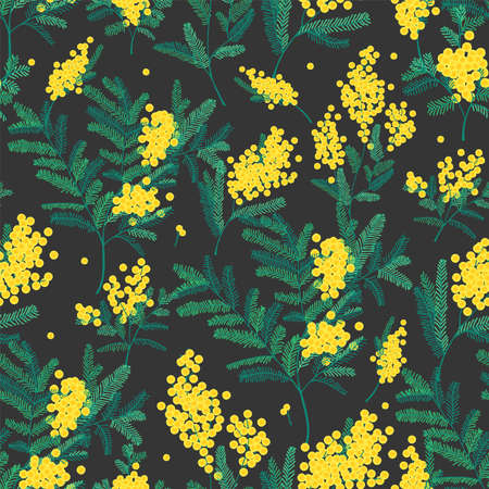 Natural seamless pattern with gorgeous blooming mimosa flowers on black background. Backdrop with spring flowering plants vector illustration in vintage style for textile print, wrapping paper. Illustration