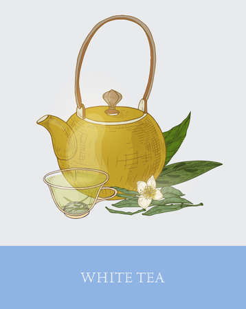 Colorful drawing of teapot, glass cup with steeping white tea, fresh flowers and leaves on gray background. Tasty aromatic beverage. Vector illustration hand drawn in elegant vintage style for tag