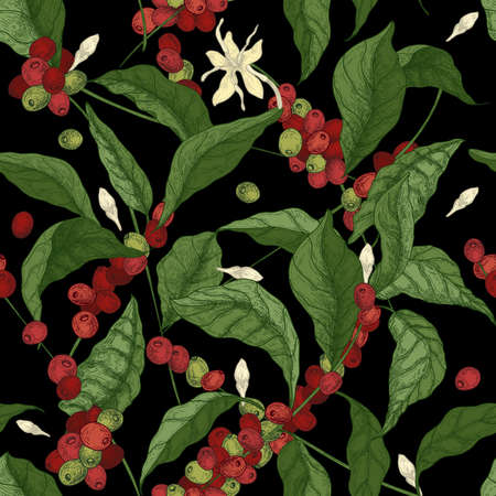 Beautiful seamless pattern with coffea or coffee tree branches, leaves, blooming flowers and fruits on black background. Colorful vector illustration in antique style for fabric print, wallpaper.