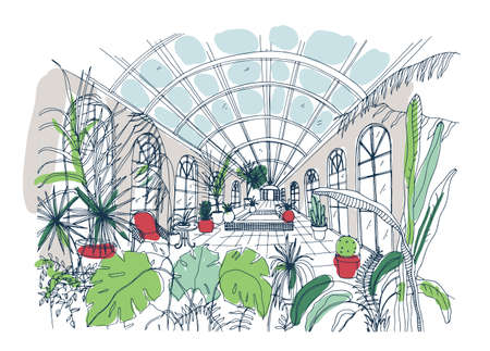 Freehand sketch of interior of greenhouse full of tropical plants. Colorful drawing of glasshouse with palms, exotic trees growing in pots and large panoramic windows. Colored vector illustration