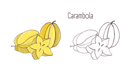 Colorful and monochrome outline drawings of carambola or starfruit. Whole and cut in cross-section ripe juicy fruits isolated on white background. Gorgeous natural hand drawn vector illustration.