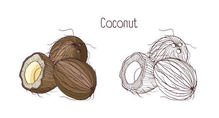 Drawings of coconut
