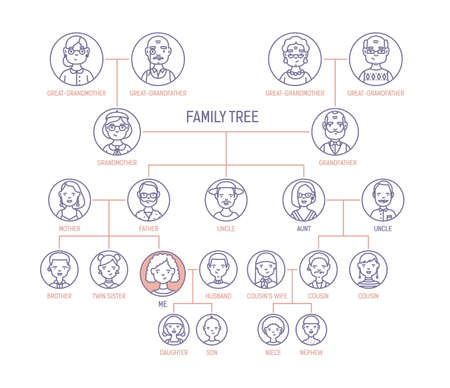 Family tree, pedigree or ancestry chart template with mens and womens portraits in round frames. Representation of links between relatives and their ancestors. Vector illustration in line art style.