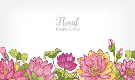Horizontal banner or floral background decorated with bright colored blooming lotus flowers and leaves at bottom edge. Hand drawn botanical vector illustration for decorative natural backdrop