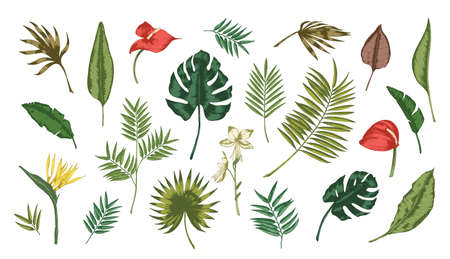 Collection of tropical leaves of various plants isolated on white background. Set of exotic foliage of different size and color. Natural design elements. Colorful realistic vector illustration.