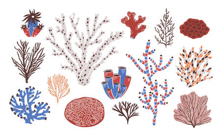 Collection of various corals and seaweed or algae isolated on white background. Beautiful underwater species, deep sea creatures, aquatic or ocean flora and fauna. Flat colorful vector illustration