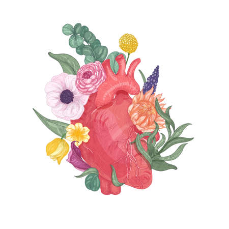 Realistic anatomical heart overgrown by blooming flowers and plants. Hand drawn on white background. Colorful vector illustration in vintage style for Valentines day greeting card, party invitation. Illustration