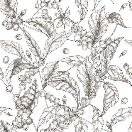 Beautiful seamless pattern with coffea or coffee tree branches, leaves, blooming flowers and fruits on white background. Contour vector illustration in antique style for fabric print, wallpaper. Фото со стока - 96068086