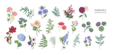 Collection of popular  flowers and decorative plants isolated on white background. Botanical colorful hand drawn vector illustration. Illustration