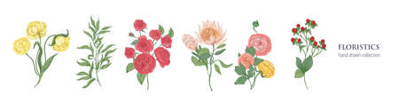Set of blooming flowers and decorative flowering plants for floristics isolated on white background.  Vector illustration.