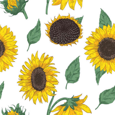 Elegant floral seamless pattern with sunflower parts.