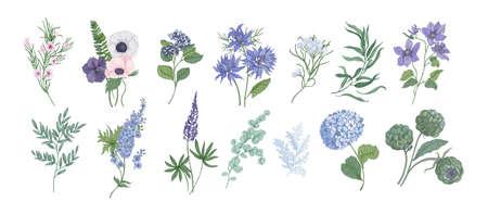 Bundel van gedetailleerde tekeningen van prachtige floristische bloemen en decoratieve kruiden geïsoleerd op een witte achtergrond. Set van prachtige bloemen en kruiden decoraties. Botanische hand getekend vectorillustratie. Vector Illustratie