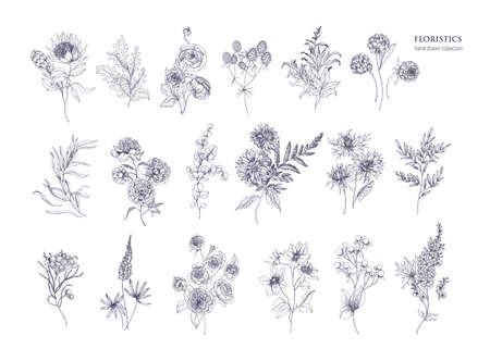 Set of beautiful floristic flowers, flowering plants and wild herbs. Hand drawn with black contour lines on white background. Bundle of elegant botanical decorations. Vector illustration.