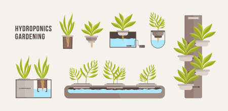 Collection of green plants growing in pots with mineral nutrient solution. Bundle of cross sections of hydroponic gardening systems isolated on light background. Vector illustration in flat style.  イラスト・ベクター素材