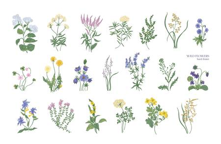 Collection of detailed drawings of different botanical flowers and decorative flowering plants isolated on white background. Bundle of elegant floral decorations. Colorful realistic vector illustration. Illustration
