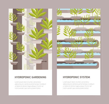 Bundle of vertical banners with plants growing in pots with mineral solution and place for text. Hydroponic gardening systems advertisement or promotion. Colorful vector illustration in flat style  イラスト・ベクター素材