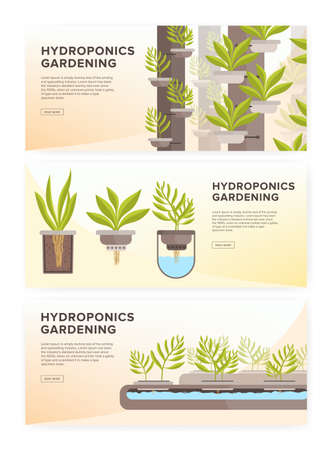 Set of horizontal web banners with plants growing in pots with mineral solution and place for text. Hydroponic gardening systems advertisement. Colored vector illustration in modern flat style