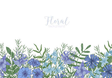 Rectangular background decorated with blue wild blooming flowers and meadow flowering herbs at bottom edge. Gorgeous decorative floral border. Natural realistic hand drawn vector illustration.