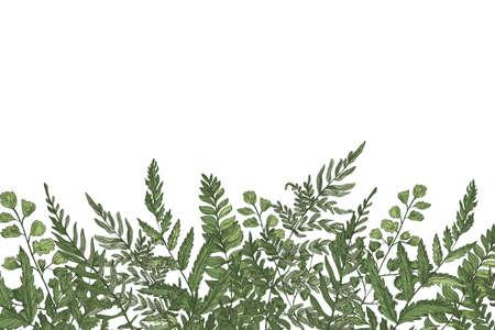 Poziome tło z pięknymi paprociami, dzikimi ziołami lub zielonymi roślinami zielnymi rosnącymi na dolnej krawędzi na białym tle. Ziołowe tło lub granicy piękne realistyczne ilustracji wektorowych.