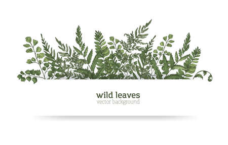 Beautiful horizontal background or banner decorated with gorgeous ferns, wild herbs or green herbaceous plants. Elegant herbal backdrop or border. Colorful realistic natural vector illustration.