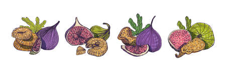 Collection of elegant detailed natural drawings of fig isolated on white background. Bundle of whole and cut exotic dried fruits hand drawn in beautiful antique style. Colorful vector illustration.