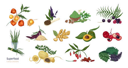 Collection of elegant botanical drawings of superfoods isolated on white background. Fruits, berries, seeds, root crops, leaves and powder. Natural healthy and wholesome food. Vector illustration. Imagens - 101249176