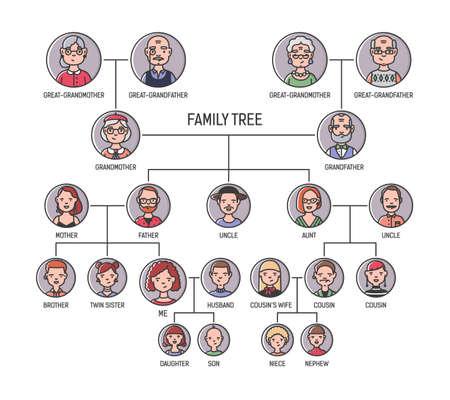 Stamboom-, stamboom- of afstammingsgrafieksjabloon. Leuke portretten van mannen en vrouwen in ronde kaders die met elkaar zijn verbonden door lijnen. Verbanden tussen familieleden. Kleurrijke vectorillustratie in lineart-stijl.