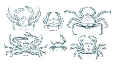 Colección de elegantes dibujos de varios tipos de cangrejos. Paquete de hermosos animales marinos o crustáceos dibujados a mano sobre fondo blanco. Ilustración de vector monocromo en estilo de grabado vintage.
