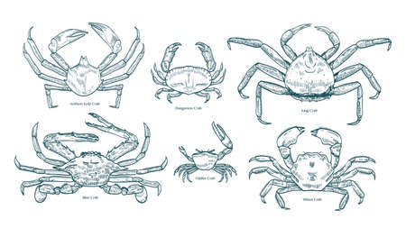 Collection of elegant drawings of various types of crabs. Bundle of beautiful marine animals or crustaceans hand drawn on white background. Monochrome vector illustration in vintage engraving style.